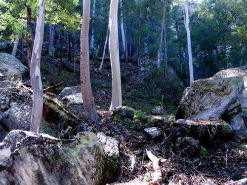 Dry Sclerophyl Forest Australia
