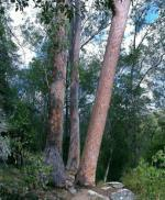 Dry sclerophyl forest - About Australia page hero slide