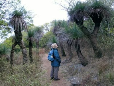 Giant grass trees Guided walks