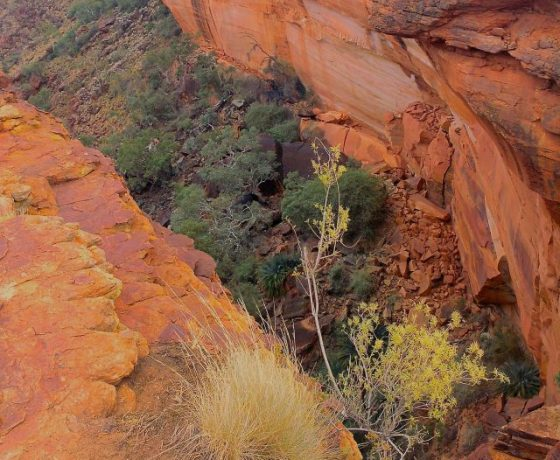 Looking deep between the sheer faces of Kings Canyon during a 3 to 4 hour  Rim Walk