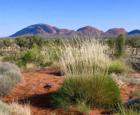 An artist's haven with spinifex, cane grass, desert oaks, red sand and magnificent landforms can stimulate a  creative expression of Australia's heartland.