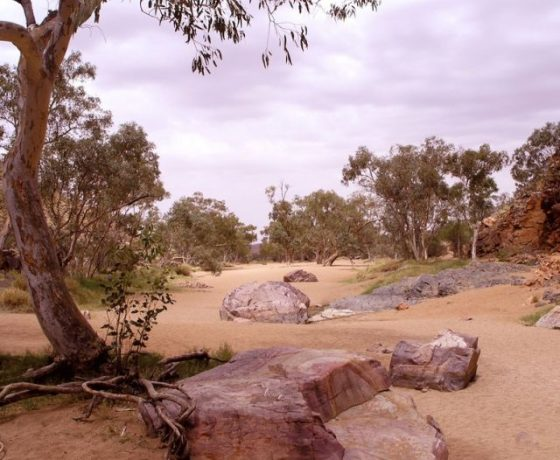 Scenic beauty and tranquility prevails in smaller gaps and water courses seldom visited by mainstream tourists adding quality to our Central Australia tours