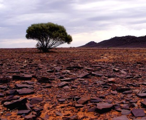 Break-away desert of stone traversed on the way to Chambers Pillar, adding variety to Australia's selection of sandy, gibber and stony deserts