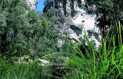 Carnarvon Gorge Tours
