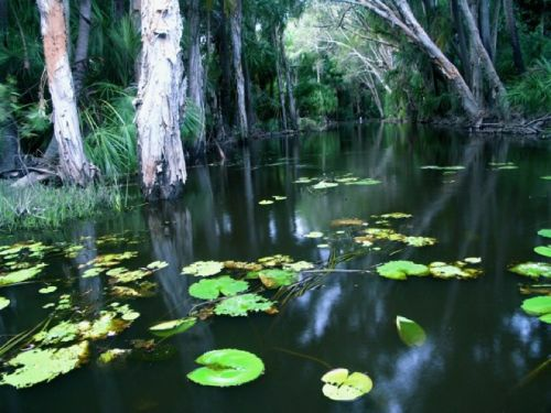 Paperbark wetlands Australia