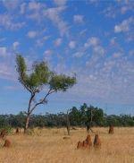 Savannah grasslands - About Australia page hero slide