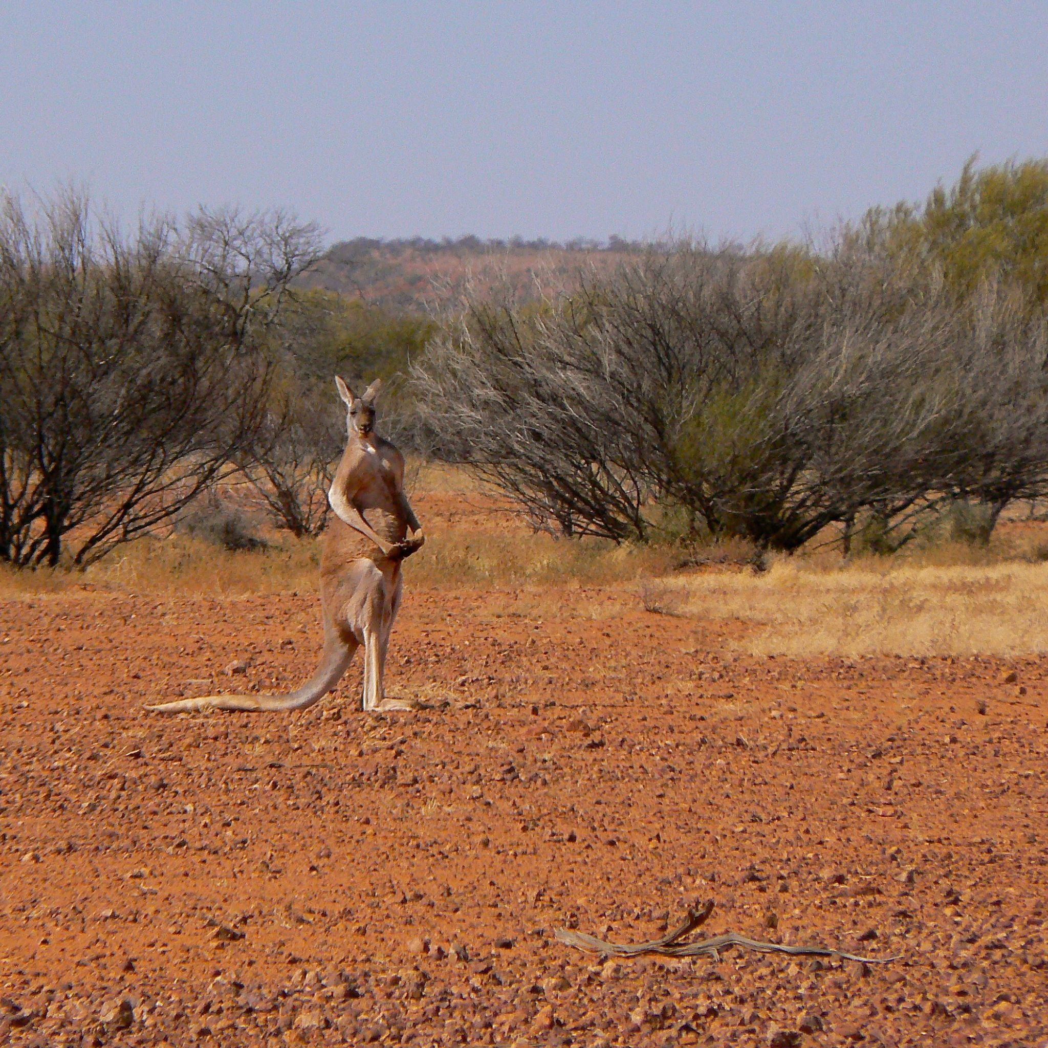 Corner Country Iconic Australia Outback Tour ⎮nature