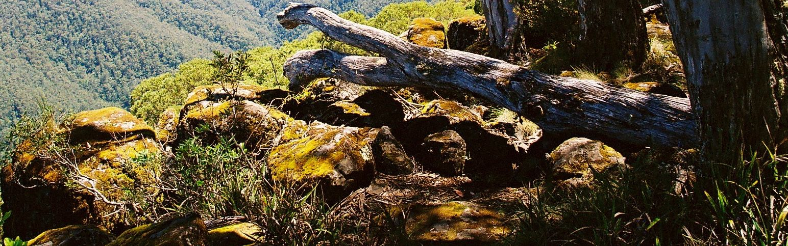 Barrington Tops forest ecosystem seen on Great Divide Tour