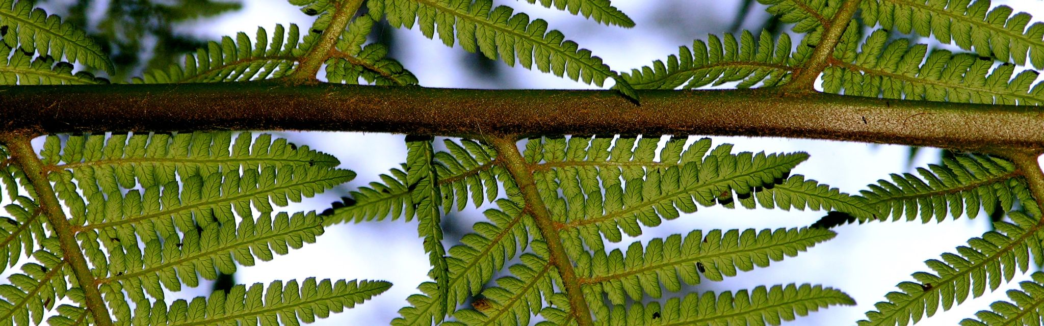 Under-side detail of a Tree Fern, image from a Nature Bound Australia tour