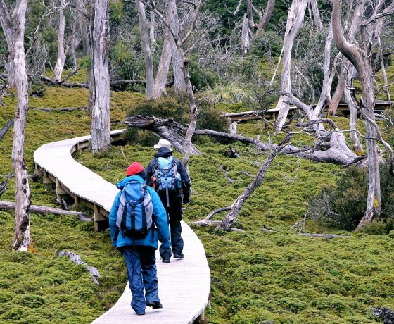 Tour participants walk the protective board walk through Cradle Mountain National Park forest