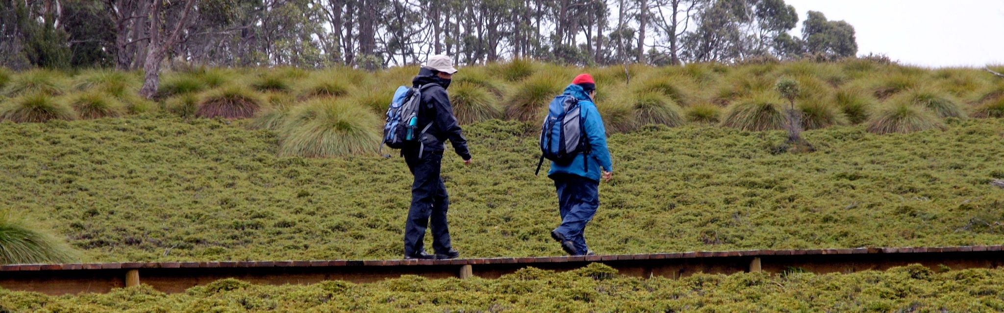 Two guests walk the Tasmanian boardwalk on our Australian guided walking holidays