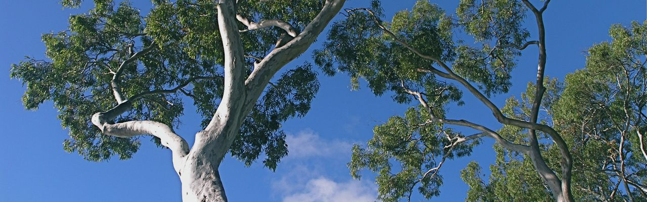 Tall tree canopy Noosa National Park, image from a Nature Bound Australia tour