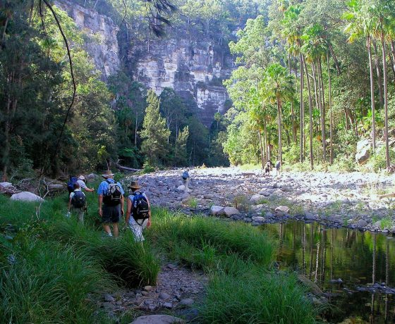Early morning enjoyment, wandering up Carnarvon Gorge full of anticipation  and far from any urban spoil -joys of the Australian bush