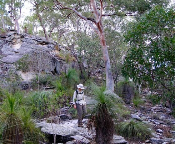 The Central Highlands of Queensland provide delightful walking opportunities in an iconic Australian bush setting.
