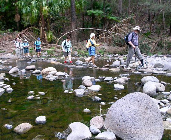 A sense of joy and adventure washes over our guests as they rock hop across one of many creek crossings in Carnarvon Gorge