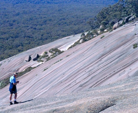 Exploring the colour stained slopes of Bald Rock will reveal a wealth of life from reptiles to hidden gardens, rock orchids and ferns and a spectacular showing of mosses and lichens