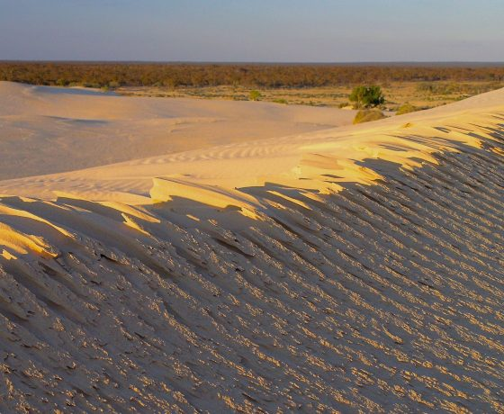 The wind crested face of a Lake Mungo dune edging its way into the Mallee Woodland beyond, a perfect place to witness a glorious outback sunrise
