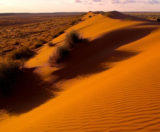The setting sun lights up the Big Red sand ridge of the Simpson Desert and guests turn to living in the moment