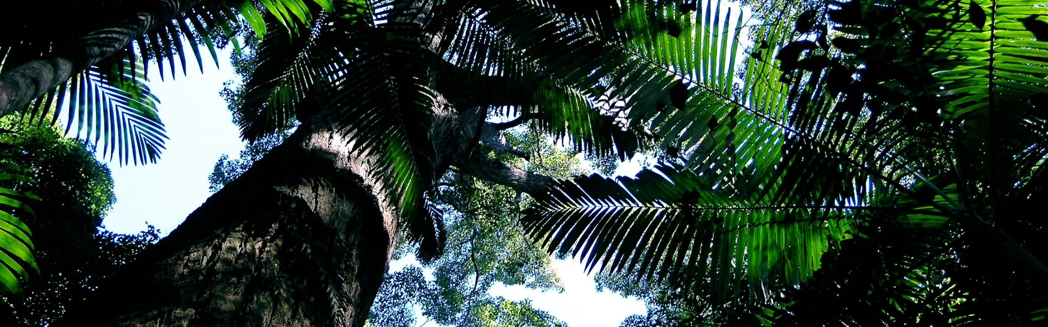 Palms in the rainforest canopy, image from a Nature Bound Australia Tour