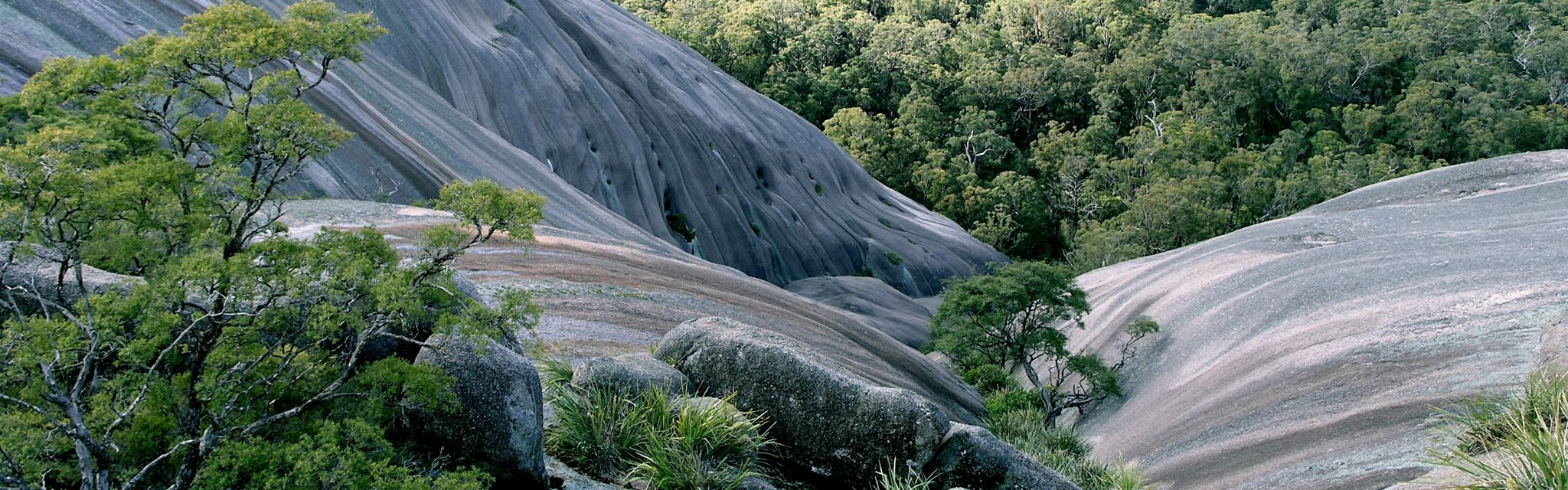Slopes of Bald Rock monolith, a feature of Great Divide and Australia World HeritageTour