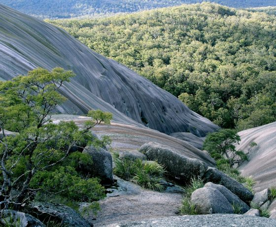 Water run-off and nutrients maintain life in the hidden gardens, crevices and slopes of Bald Rock, the largest granite monolith in the Southern Hemisphere