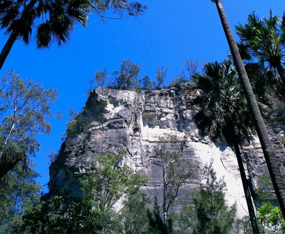 Towering sandstone bluffs rise out of an idyllic palm filled oasis, rich in ancient plant species, prolific bird and wildlife activity