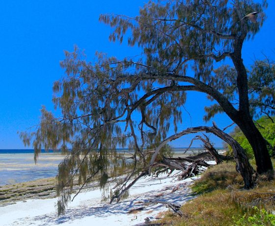Far from the mainland, pristine Lady Musgrave Island sits at the southern end of the world heritage Great Barrier Reef, a relaxing day trip on tour