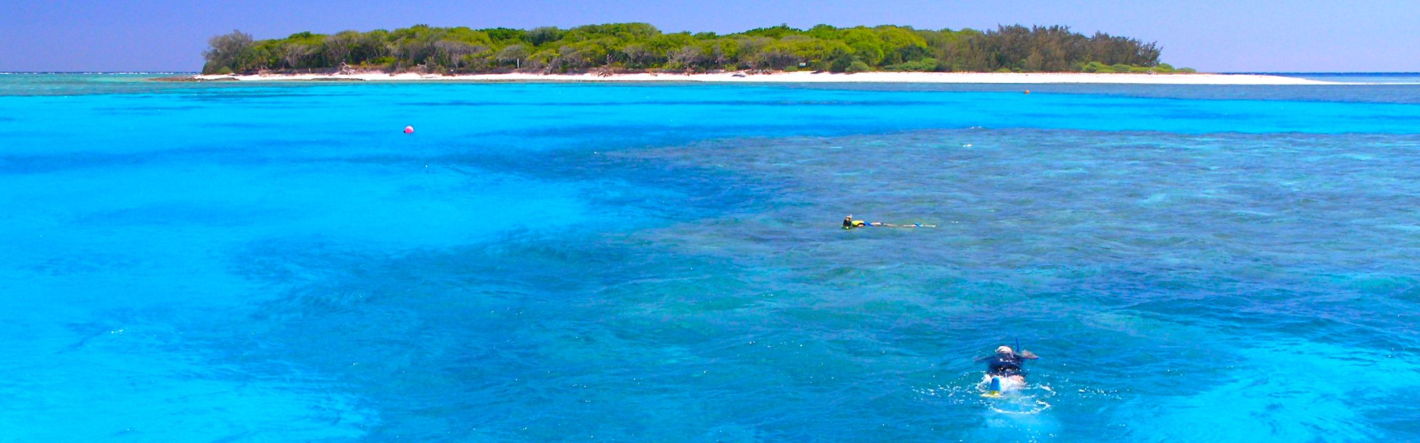 Reef Snorkelling Lady Musgrave Island, image from a Nature Bound Australia Tour