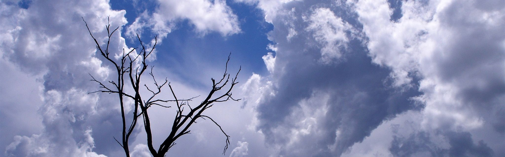 Tree reaching for the rain clouds, image from a Nature Bound Australia tour