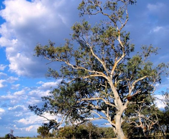 """Guests are often drawn to """"the big screen"""" epic of Australia's cloud formations freed from city clutter or the informality of a solitary gum tree and the life story it reveals"""