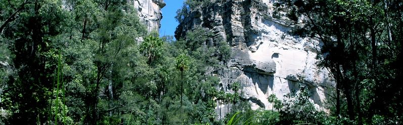 Queensland outback, sandstone walls of Carnarvon Gorge featuring in a Uniquely Australia Land of Contrasts Tour