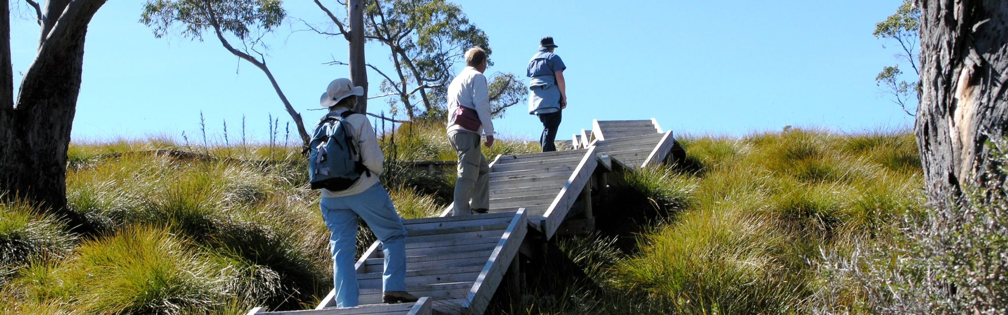 Board walk steps make for easy climbing on Guided walking Holidays Australia