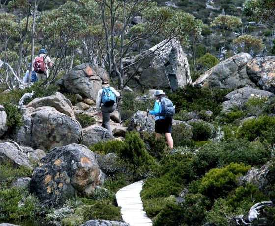 Boardwalk circuit trails through remote Mt Field National Park make a day of guided walking in the wild enjoyable