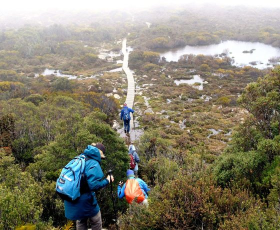 Guided walks in Tasmania's wild can be enjoyable and experiential in all weather conditions