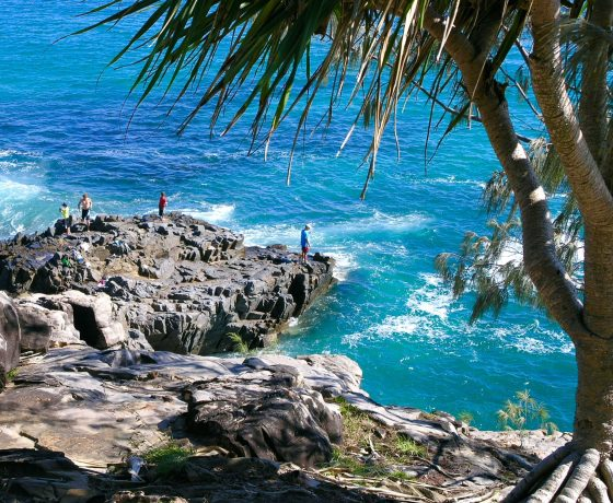 Toward journeys end, a walk in the Noosa Heads National Park reveals idyllic coves, marine life, Koalas and bronzed Aussies surfing the waves