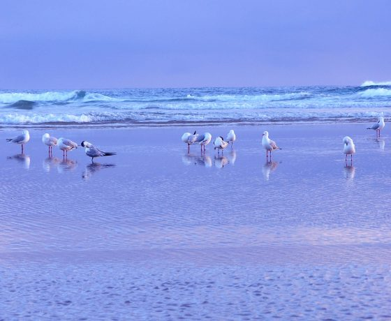 After sunrise over the Pacific Ocean we join the early morning beach-goers