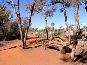 Seat of contemplation on the Uluru Base Walk