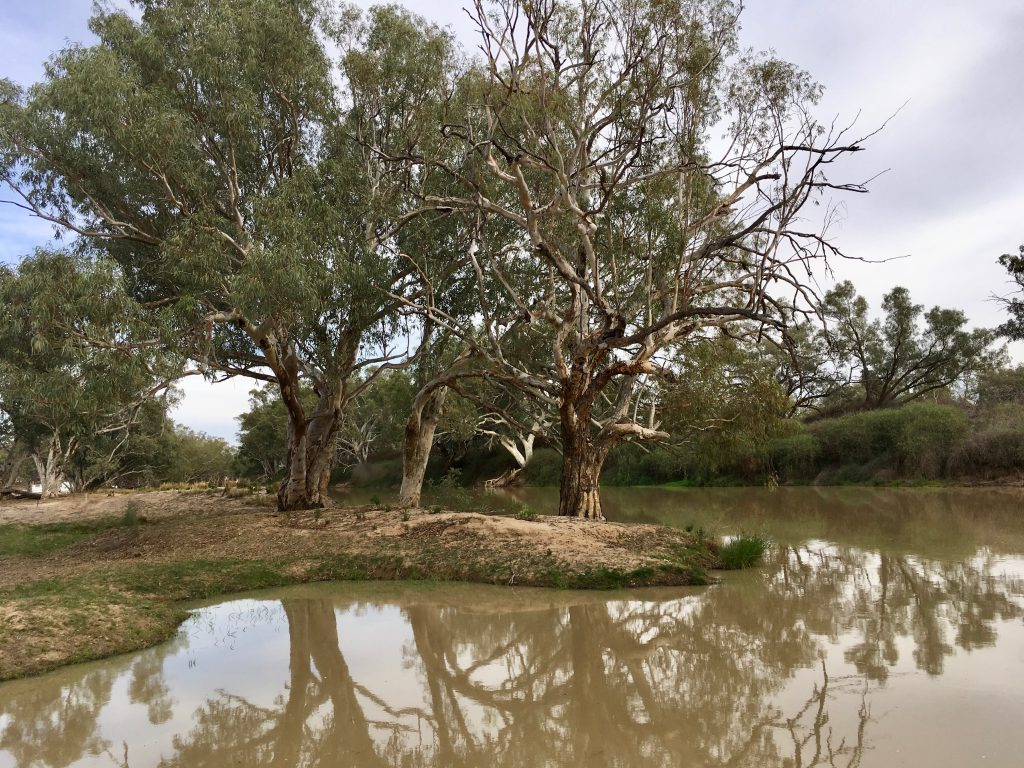 River Red Gums are the centre of all life from insects to reptiles and birds, and tour guests soaking up the environment