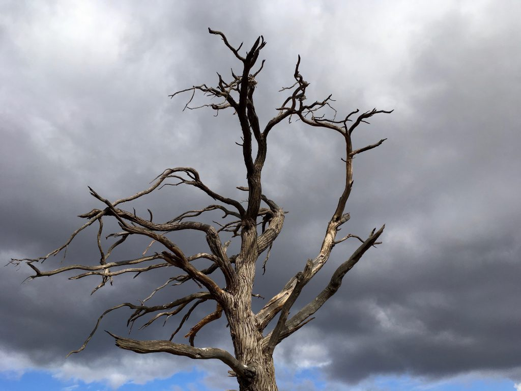 Dead Tree Sculpture in the Flinders Ranges