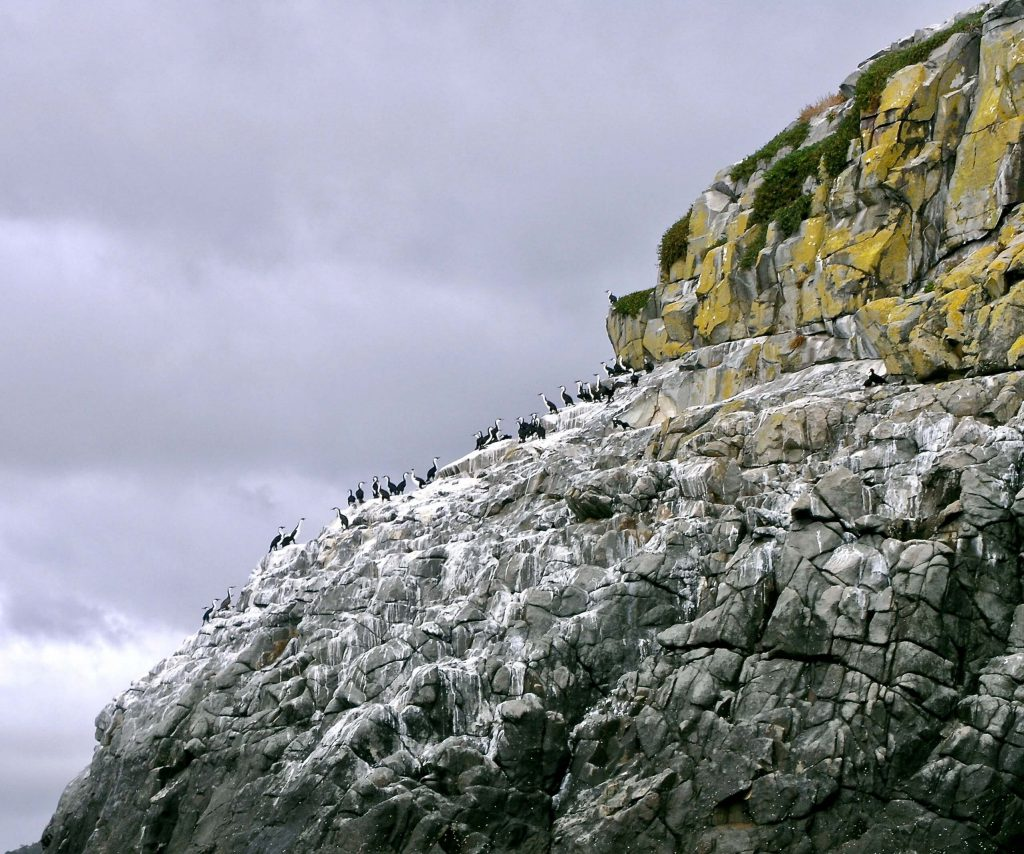 Cormorant's Rest on sea cliffs of Tasman National Park