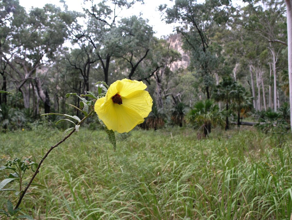 A lone bloom in the wilderness hanging out to make a difference